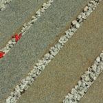 ナナメの中の赤い花